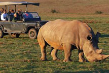 BIG 5 Garden Route Game Safari