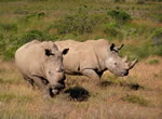 Rhino viewing at Garden Route Game Lodge